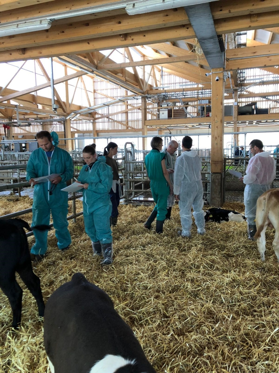 "Workshop ""Weiterführende Diagnostik Kalb"""